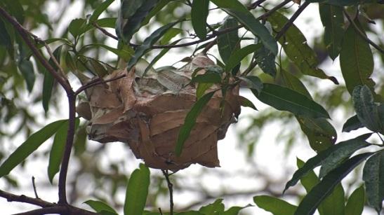 ant nest.JPG