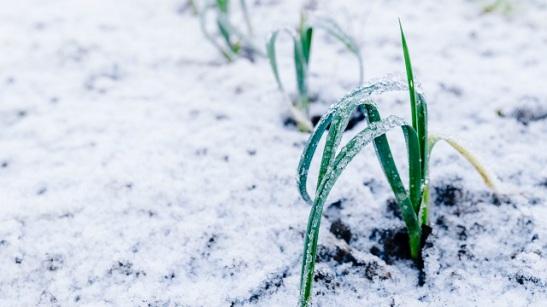 plant in snow.jpg