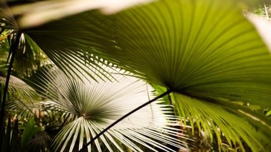 palms in merwins garden
