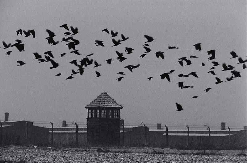 Auschwitz birds