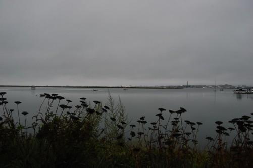 overcast morning.jpg