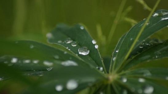 morning-rain